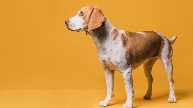 Porträt des schönen hundes mit kopienraum