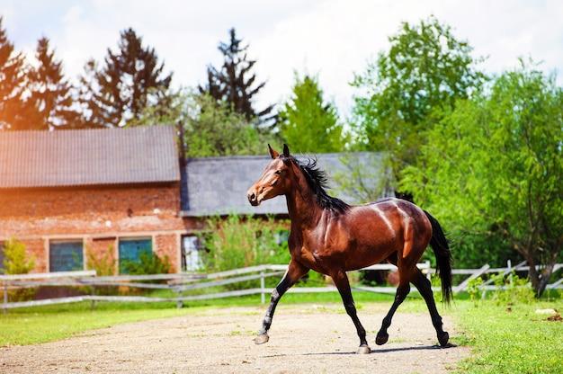 Porträt des schönen pferdes im sommer