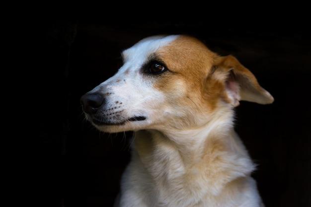 Porträt des streunenden hundes auf schwarzem hintergrund