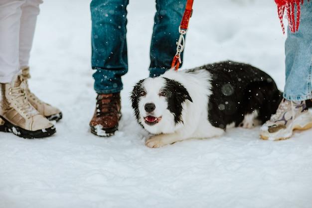 Porträt des süßen schwarzen und weißen ängstlichen hundes