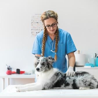 Porträt des weiblichen tierarztes den hund überprüfend, der auf tabelle in der klinik liegt