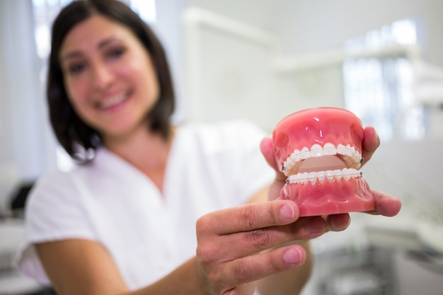 Porträt des weiblichen zahnarztes, der einen satz zahnersatz hält