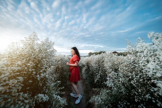 Porträt einer asiatischen jungen frau, die glückliche reisende mit rotem kleid genießt, die im weißen blühenden oder weißen margarita-blumenfeld im naturgarten von chiang mai, thailand, reise-entspannungs-urlaubskonzept genießt