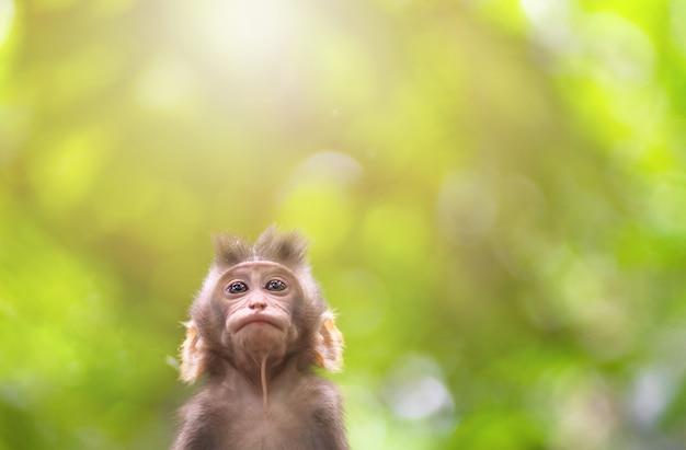 Porträt einer baby-makaken-nahaufnahme