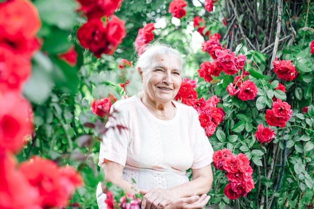 Porträt einer fröhlichen grauhaarigen alten frau, die auf einer bank unter dem bogen einer wilden rose sitzt
