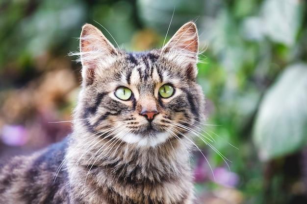 Porträt einer gestreiften flauschigen katze, die genau nach oben schaut