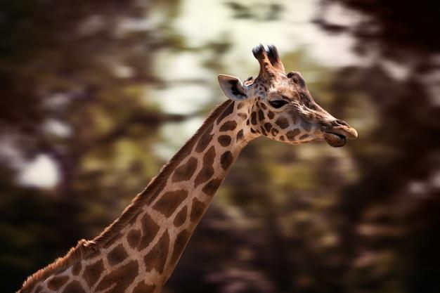 Porträt einer jungen giraffe