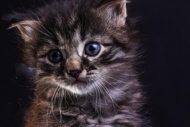 Porträt einer katze