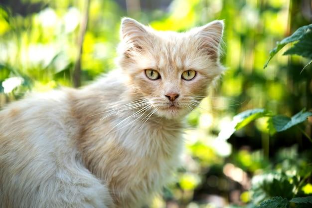 Porträt einer kleinen gelben katze, die im grünen gras an einem sonnigen tag sitzt.