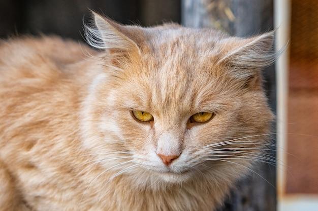 Porträt einer niedlichen flauschigen katze auf der straße
