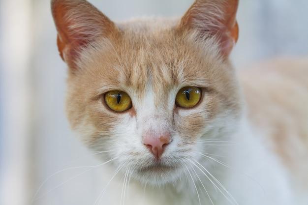 Porträt einer rothaarigen und weißen obdachlosen katze.