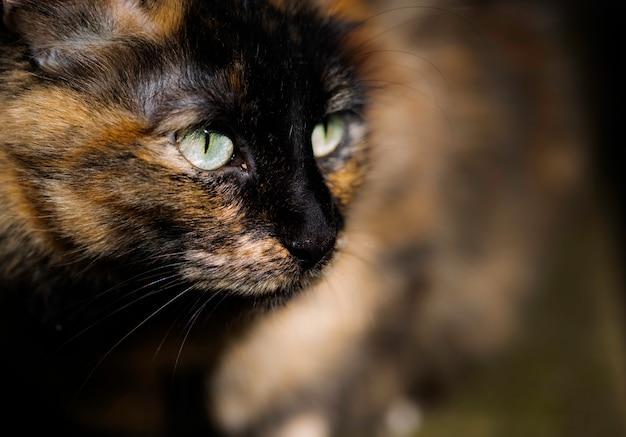 Porträt einer schönen gestreiften katzennahaufnahme