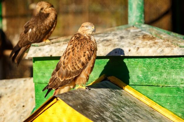 Porträt einer schönen vogelfalkennahaufnahme
