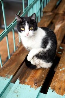 Porträt einer schwarz-weißen katze mit gelben augen sitzt nach dem regen auf den brettern.
