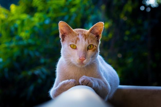 Porträt einer süß aussehenden katze mit gelben augen und schnurrhaaren schön weich flauschig reinrassig