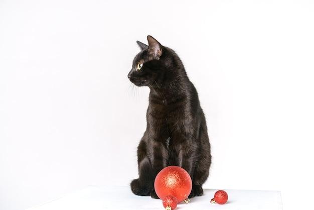 Porträt einer süßen schwarzen katze, fröhlicher weihnachtsmann auf weißem hintergrund sieht mit gelben augen festlich aus ...