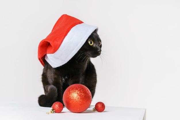 Porträt einer süßen schwarzen katze, fröhlicher weihnachtsmann-look, ein weißer hintergrund sieht mit gelben augen festlich aus ...