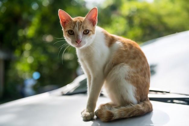 Porträt einer weißen gelben thailändischen katze mit grünem blatt bokeh