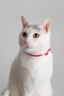 Porträt einer weißen katze