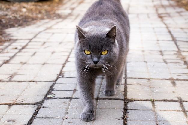 Porträt einer zottigen katze auf einer asphaltstraße. nahaufnahme einer katze, die mit gelben augen auf einer betonstraße sitzt oder sich versteckt. eine charmante katze, die auf der straße sitzt, ist unaufmerksam. tabby-straßenkatze, die die kamera betrachtet.