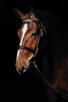 Porträt eines braunen pferdes