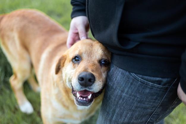 Porträt eines entzückenden glücklichen hundes, der von der hand eines mannes in einem grünen park gestreichelt wird