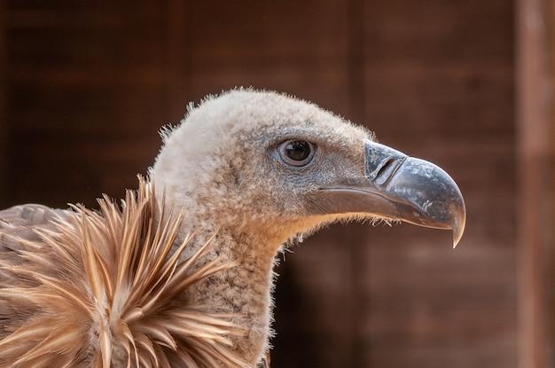 Porträt eines geiervogels der beute
