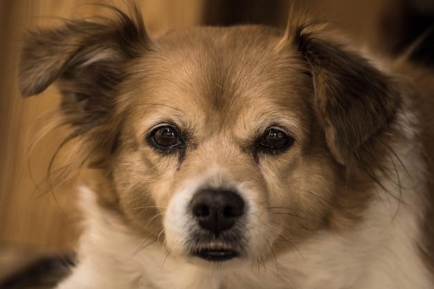Porträt eines glücklichen netten braunen hundes, nahaufnahmegesicht