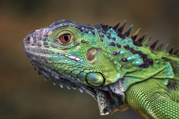 Porträt eines grünen leguans in den hellen farben