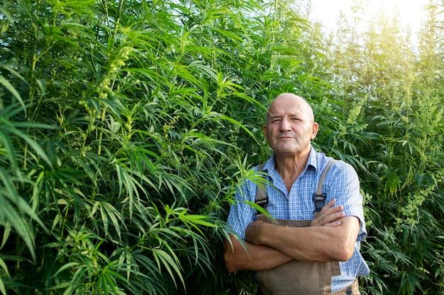 Porträt eines hochrangigen agronomen, der auf hanf- oder cannabisfeld steht