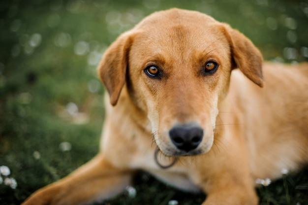 Porträt eines hundes, der kamera betrachtet