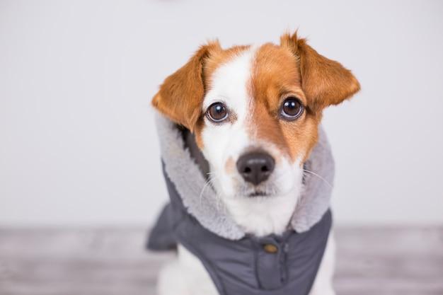 Porträt eines jungen netten kleinen hundes, der einen grauen mantel mit haube trägt