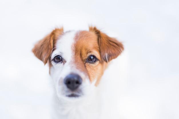 Porträt eines jungen netten kleinen hundes im schnee. braune und weiße farben. natur