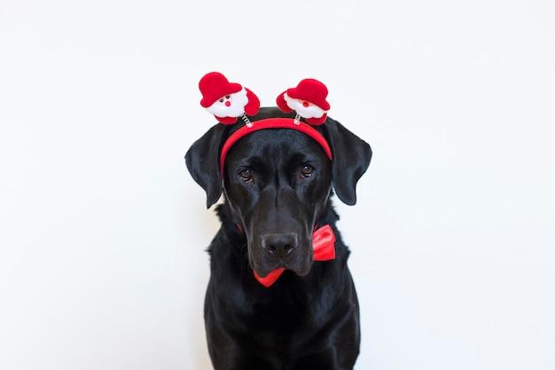 Porträt eines jungen schönen schwarzen labradors, der ein santa diadem, eine rote fliege trägt und die kamera betrachtet. weihnachtskonzept