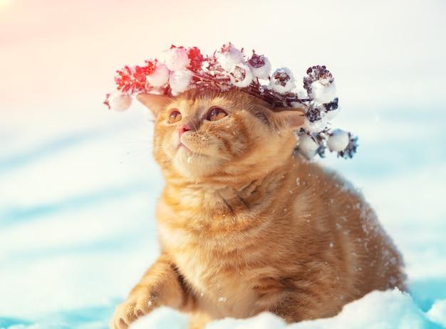 Porträt eines kätzchens, das einen weihnachtskranz trägt. katze sitzt im winter auf dem schnee