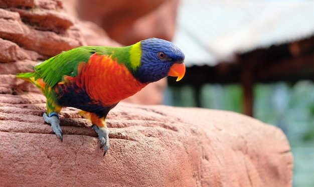 Porträt eines kleinen bunten papageien, der auf einer niederlassung sitzt. t