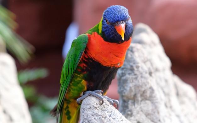 Porträt eines kleinen bunten papageien, der auf einer niederlassung sitzt.