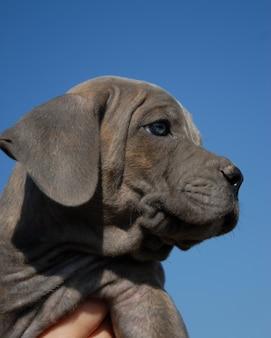 Porträt eines kleinen hundes