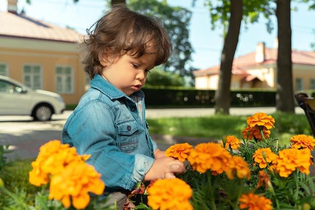 Porträt eines kleinen jungen, der eine gelbe blume in einem gartenbett in einem öffentlichen park im freien berührt oder pflückt