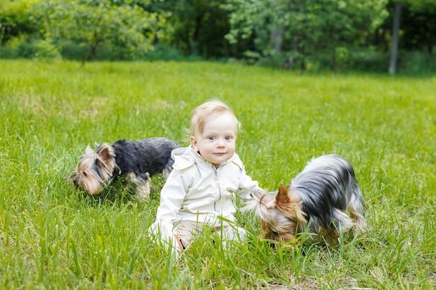 Porträt eines kleinen weißen kaukasischen jungen. an einem sommertag sitzt ein kind im gras in einem park. zwei york-hunde rennen in der nähe