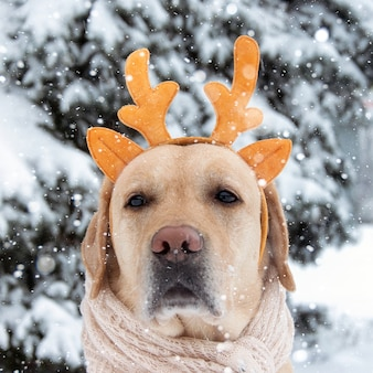Porträt eines labradorhundes mit hirschhörnern im wald.