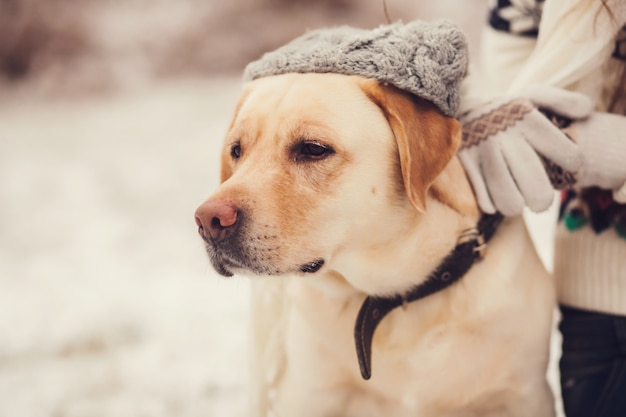 Porträt eines labradors