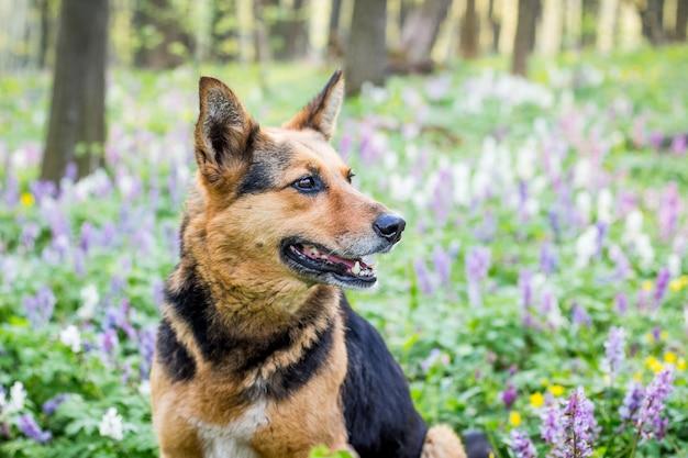 Porträt eines nahaufnahmehundes in einem frühlingswald auf einem hintergrund von blumen