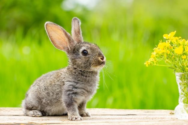 Porträt eines niedlichen flauschigen grauen kaninchens mit ohren auf einem natürlichen grünen hintergrund