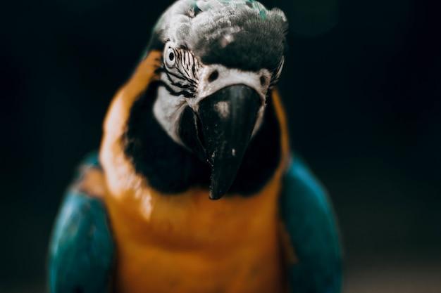 Porträt eines schönen papageis in einer natürlichen umgebung