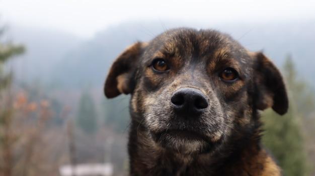 Porträt eines streunenden braunen netten welpen. kopfschuss eines hundes mit verschwommenem hintergrund mit platz für text. ein traurig aussehender straßenhund schaut in die kamera.