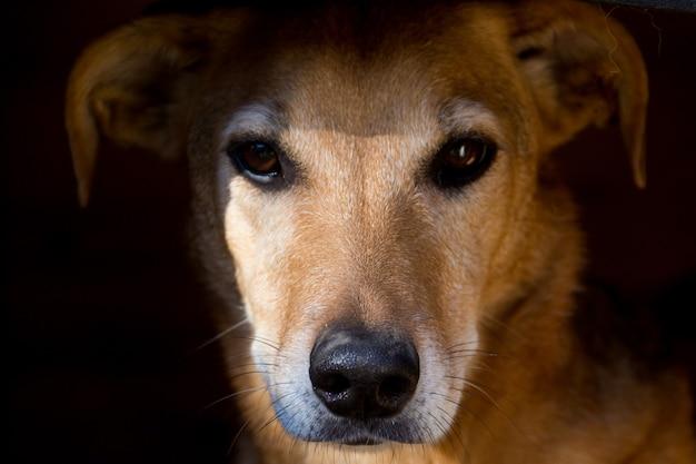 Porträt eines streunenden hundes, der auf den straßen tierquälerei erleidet