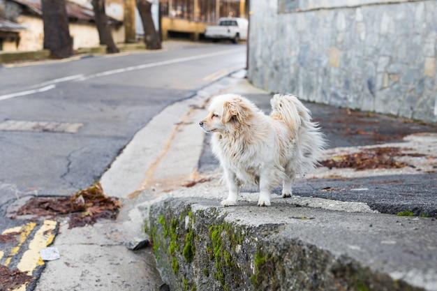 Porträt eines traurigen obdachlosen hundes
