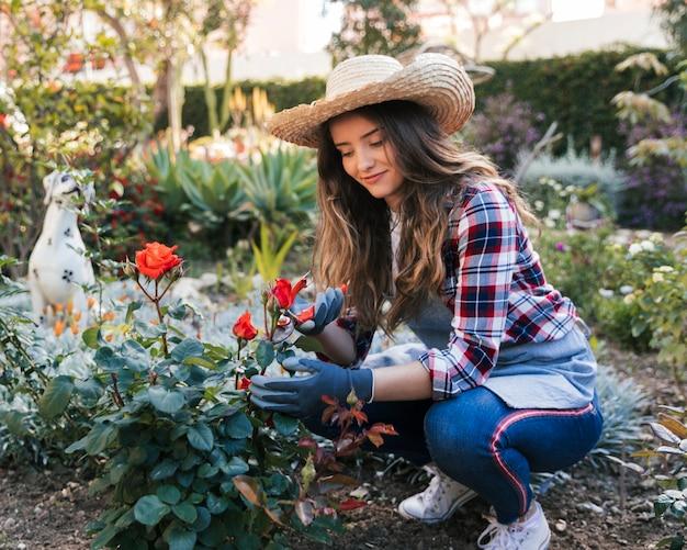 Porträt eines weiblichen gärtners, der die rosenpflanze mit gartenschere schneidet