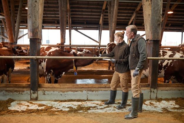 Porträt in voller länge von zwei landarbeitern, die kühe im schuppen streicheln und zwischenablagen halten, während sie vieh untersuchen, raum kopieren
